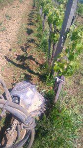 Viticulture Environnementale et désherbage mécanique