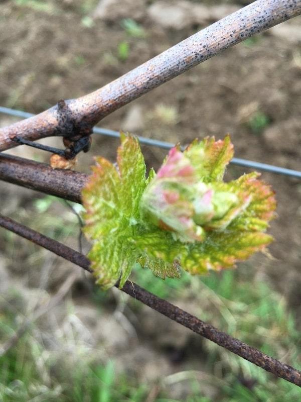 Fin des travaux d'hiver au Vignoble